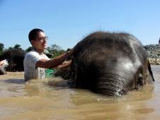 Elephants numero dos!